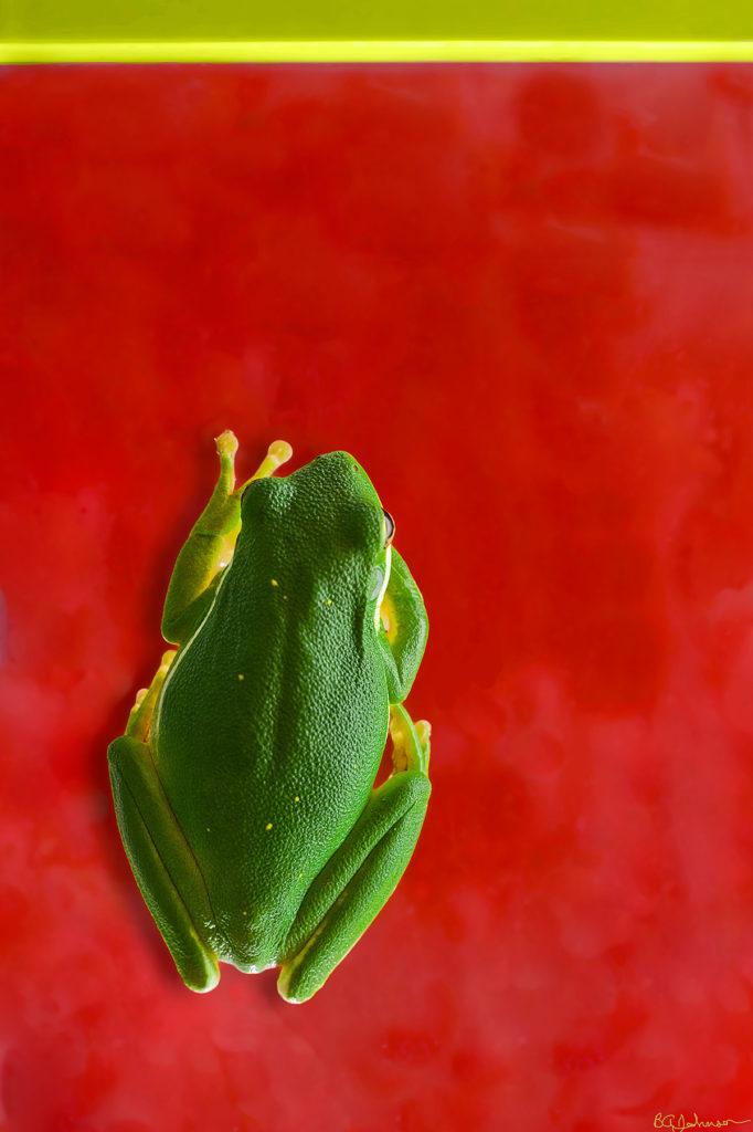 Frog-full.1